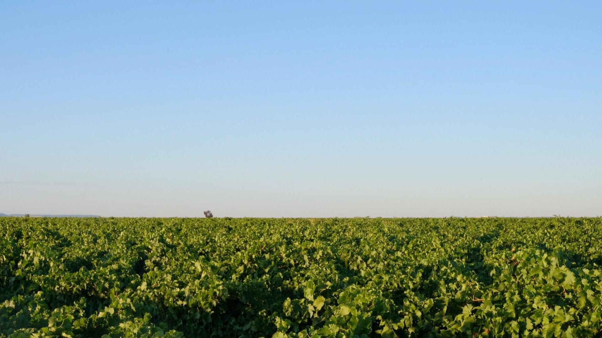 Pago de Fuente Elvira: a 'vineyard of vineyards' steeped in history