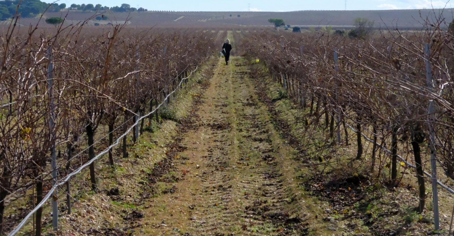 Te invitamos a descubrir <br>la esencia de una tierra convertida en vino