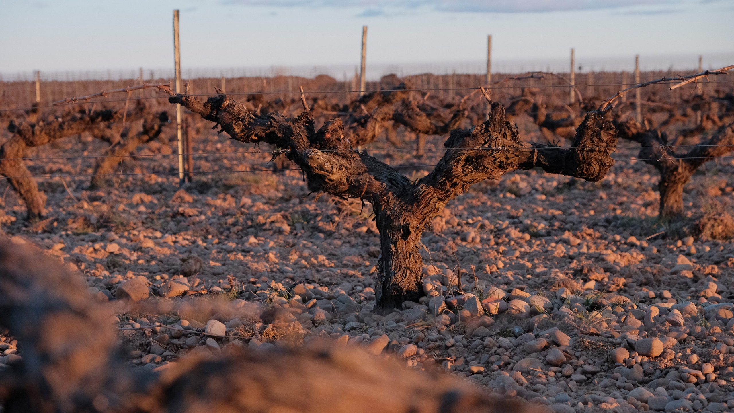 The Terroir First things first